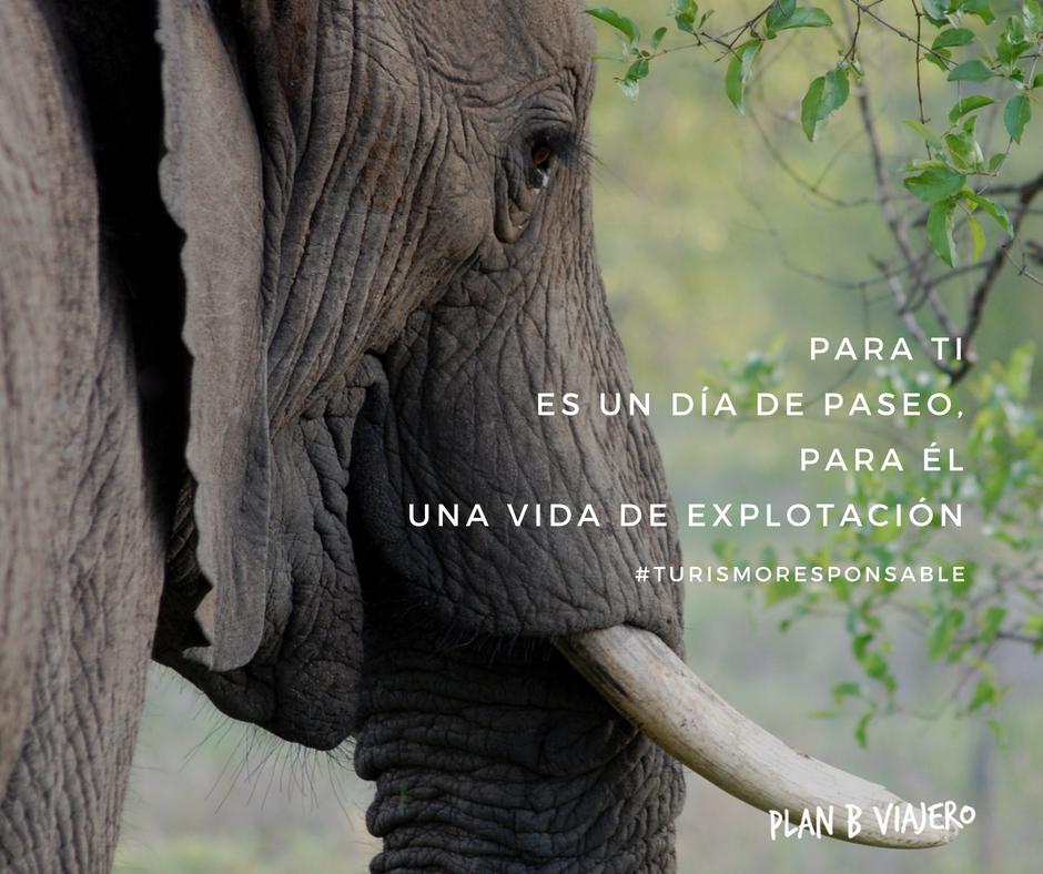 plan b viajero, turismo responsable con animales, turismo sustentable, paseos en elefante