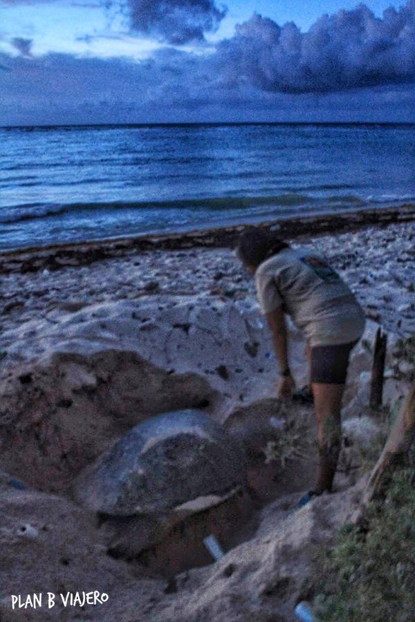 plan b viajero, voluntariado con tortugas marinas en la riviera maya, xcacel