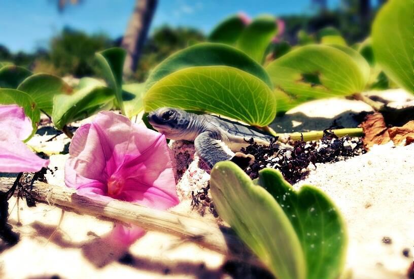plan b viajero, voluntariado con tortugas marinas, mexico, riviera maya