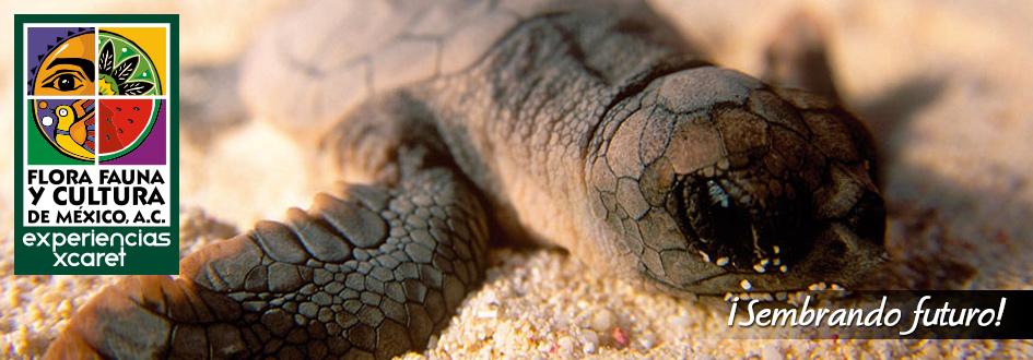 plan b viajero, flora fauna y cultura voluntariado tortugas-marinas