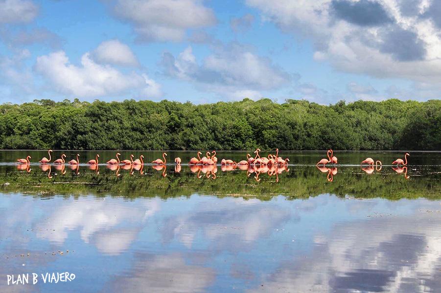 plan b viajero, reserva de celestun, flamencos yucatan, lugares para visitar cerca de Merida