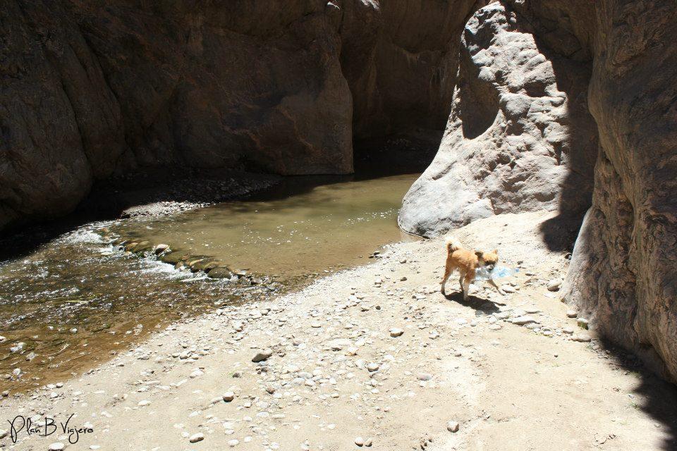 Rita, uno de los perros que nos acompañó ida y vuelta a la cascada